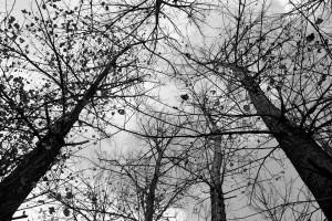 trees-816416_960_720